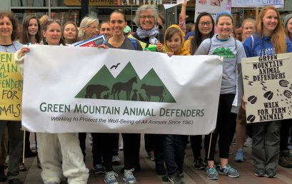 7th Annual Walk for All Animals