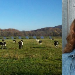 Rachel Carter Portrait with cows in a field