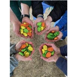 Lake Champlain Chocolate eggs in hands, donated to UVM