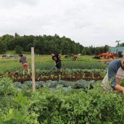 Sterling College creates food hub: farm workers in vegetable field