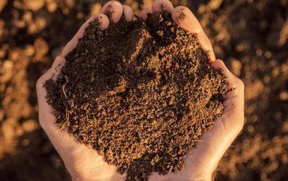 NOFA-VT: Growing Healthy Soils at Cedar Circle Farm (Online Workshop)