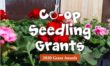 City Market Co-op Accepting 2021 Seedling Grant Applications